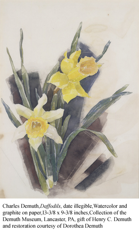 Daffodils 20with 20text
