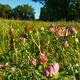 (Photo by Simone Collins Landscape Architecture/Geoff Creary) The beauty of Stroud Preserve.