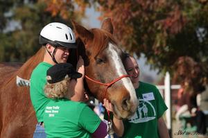 Medium 2014 happy trails horse show 20216
