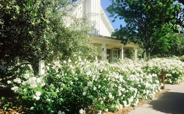 Everything Comes Up Roses at Calistoga\'s Solage, An Auberge Resort ...