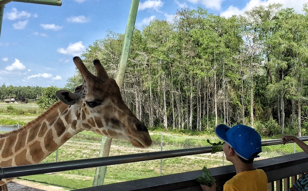 Feeding Giraffes At Lion Country Photo Credit Mandy Carter