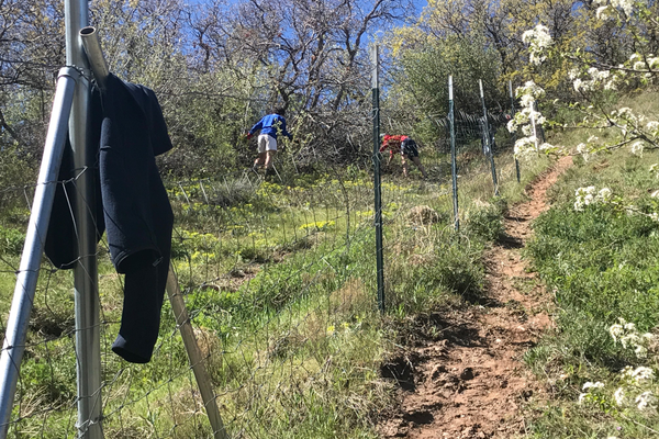 Volunteers from the University of Utah hiked up hills to pull out the noxious weed. (Natalie Mollinet\City Journals).
