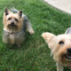 Bella and Max » Bella and Max greet us like we've been gone a month when it was really just a 10-minute trip to the store.—Patricia Tebbe Neal