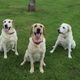 Jack, Kimber and Cody » Jack, nine, will talk your ear off. Kimber, three, is by far the biggest, but he is also a big scaredy cat. Cody, (almost) 13, is my main squeeze and he knows it. He's spoiled, but all my babies are spoiled.—Julia Croteau