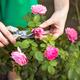 Thumb gardening