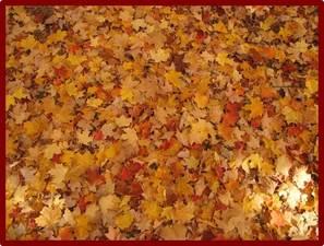 Medium leaves
