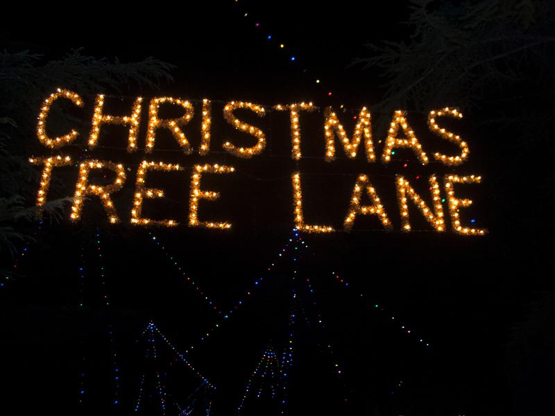 Tales Of Christmas Tree Lane Central California Life Magazine