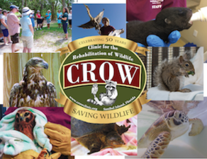 A Celebratory Evening 50 Years in the Making for CROW - start Jan 31 2018 0530PM