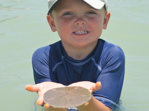 Marine Science Programs for Kids - start Feb 01 2018 0800AM