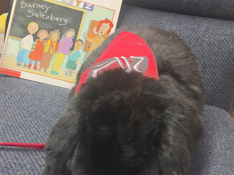 Therapy bunny listens to Parkside students read | Murray Journal