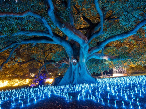 Photos from light festivals around the world give examples of what the CFABS event might be like This is a special lighting of a large tree in Sydney It is inspiring Bonita festival planners to try something similar with a downtown landmark banyan tree Photo courtesy of CFABS