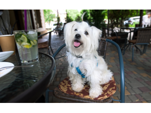 Susquehanna Valleys Dog-Friendly Restaurants as Chosen by our Readers - Mar 19 2018 0712PM
