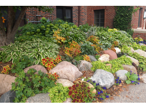 Rain gardens can be a beautiful and useful addition to your yard