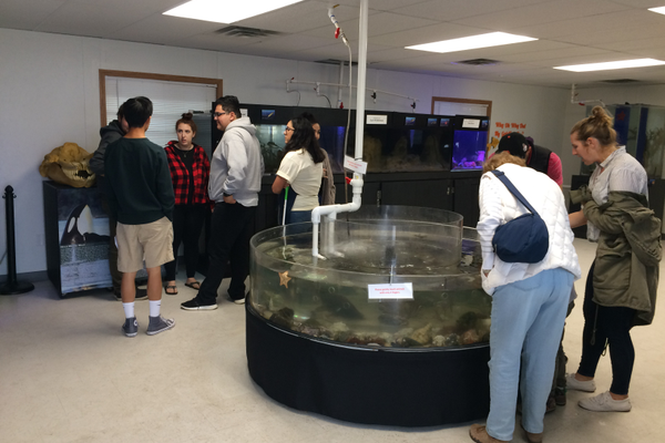 The touch tank and other displays inside the aquarium's temporary facility