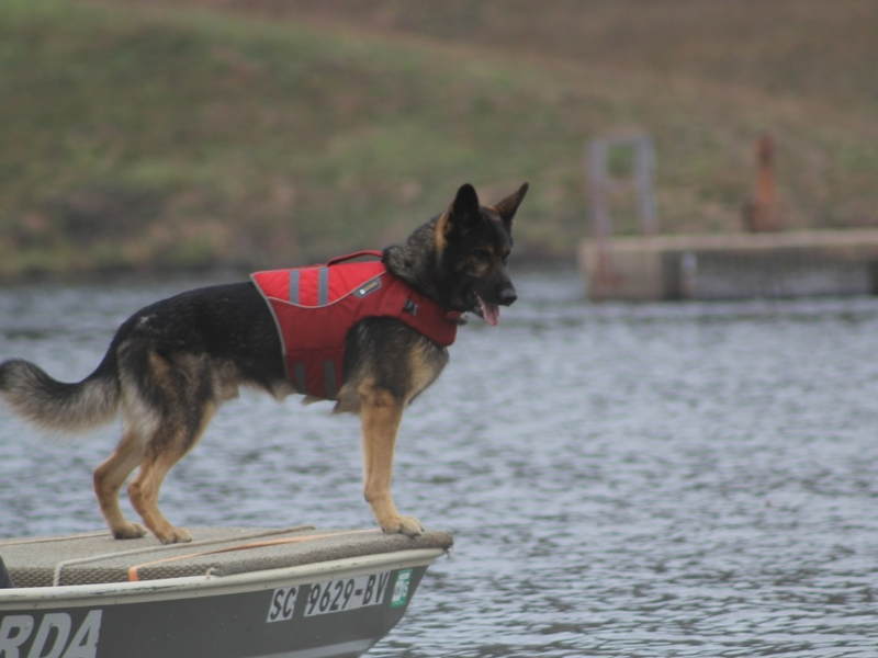 Upstate K 9 Search And Rescue Teams Win Certification Greenville