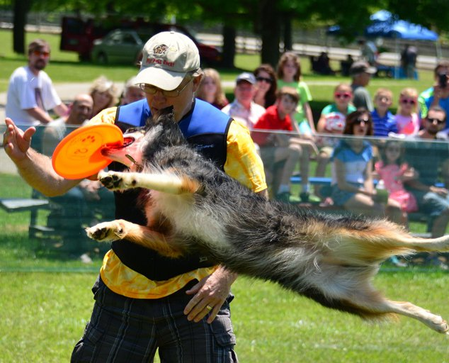 Working dog weekend frisbee dog competition 634x512 photo by sue atwell