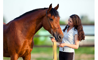 Equine therapy addiction treatment