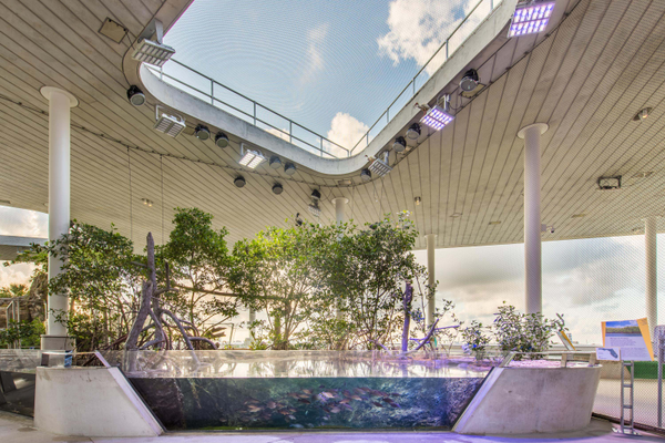 The aquarium at the Frost Museum demonstrates the importance of mangroves in the Florida ecosystem. Photo courtesy of Ra-Haus.