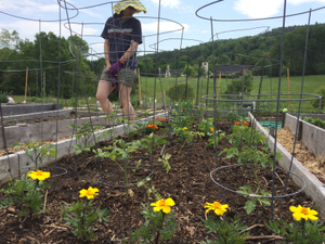 Hanovers Community Garden Flourishes Thanks To Local Residents - Jul 17 2018 1212PM
