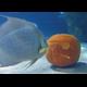 Editors Picks Events for October 2018 - Family Fun Halloween Activities