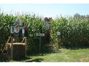 MUUV Twighlight Orchard  Corn Maze - start Oct 17 2018 0600PM