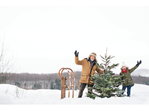 Fresh Christmas Tree Care Valuable Tips On Keeping Your Tree Fresh This Holiday Season