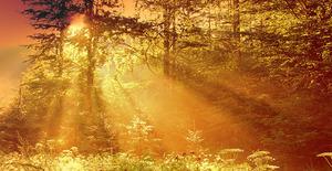Medium divine light