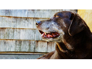 Caring for Older Pets