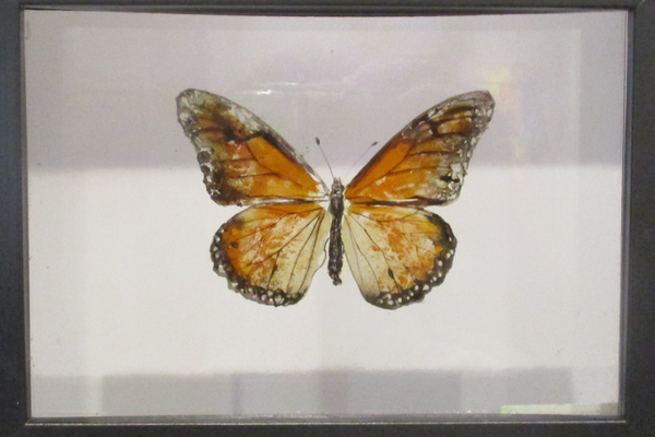 A painted butterfly on layers of resin by Robert Jenkins.