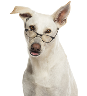 Foods for Dog Eye Health