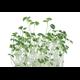 Indoor Kitchen Gardening Easy-Grow Microgreens Are Big on Nutrition