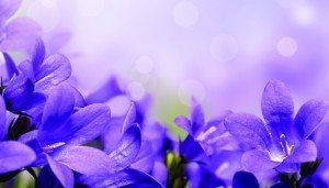 WEB-FillerAd_0415_PurpleFlowers_153627341