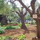 The Garden of Gethsemane where Christ spent his last hours.