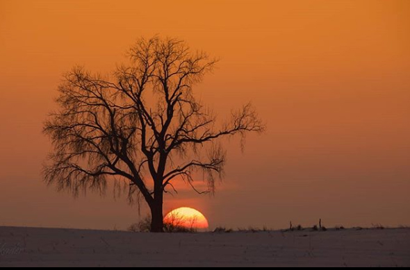 leafless tree in snow during sunset