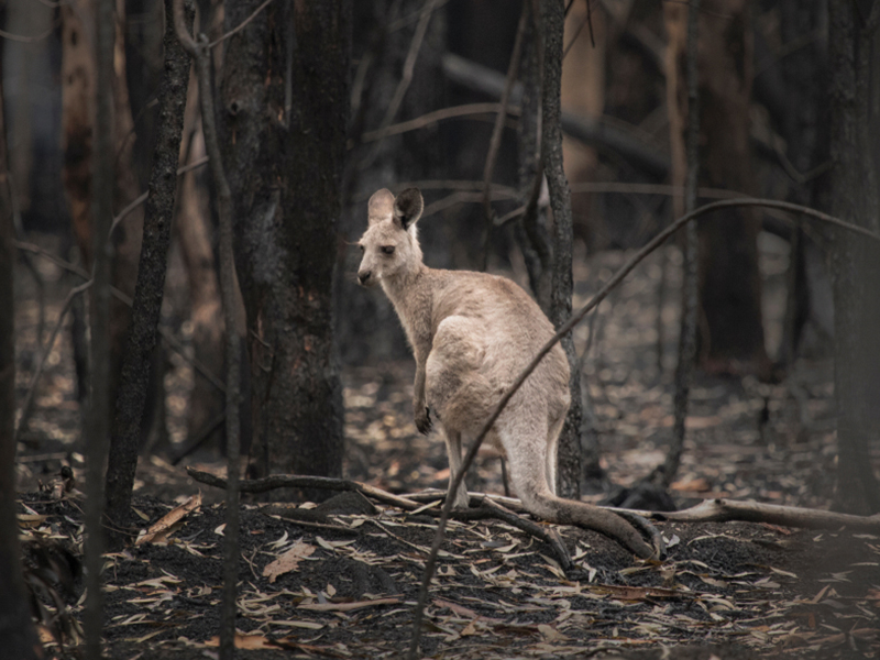 Australia Drought Wildfires Climate Change