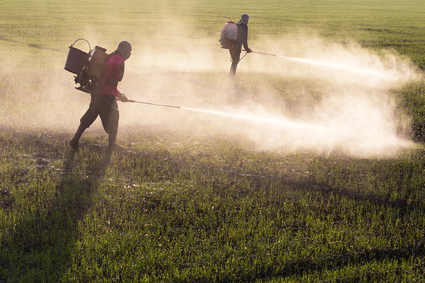 Toxic chemical pesticides sprayed on field
