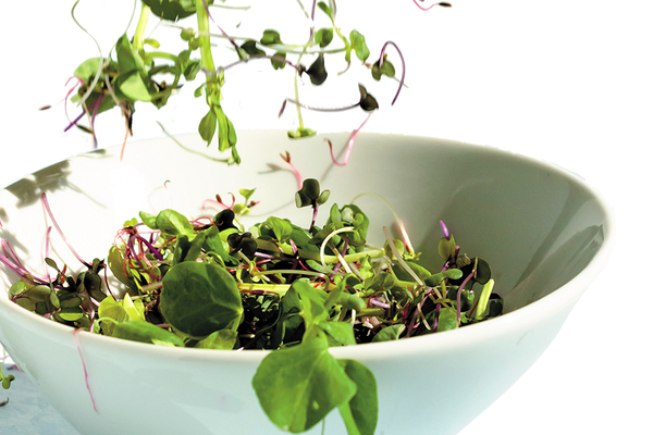 Bowl of microgreens