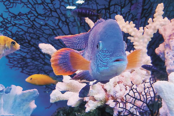 Fish swimming around coral reef