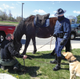 Scott Irish and Trooper William Newton attempt--unsuccessfully-- to introduce Amadeus the thoroughbred Percheron cross to Pippin the Lab