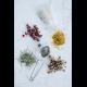 Preserving Your Herbal Harvest   Drying Methods