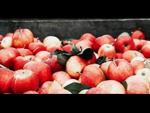 Apple Season  - start Oct 06 2021 0530PM
